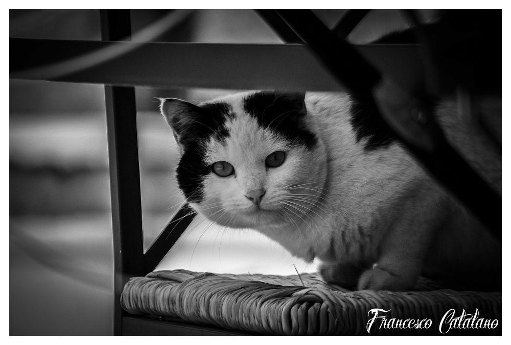 gatto.jpg by Catalanofoto