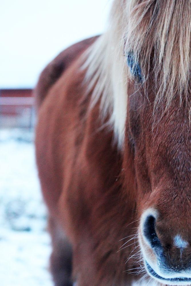 Half Horse by heiwapictures