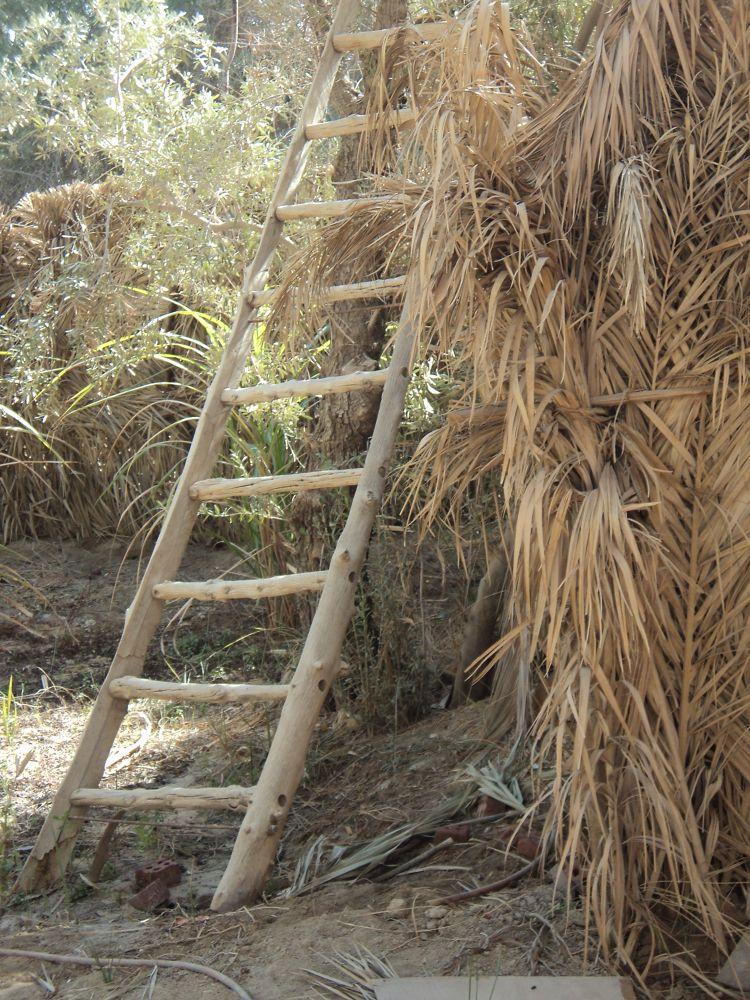 Siwa oasis in Egypt - garden by laura.kamil