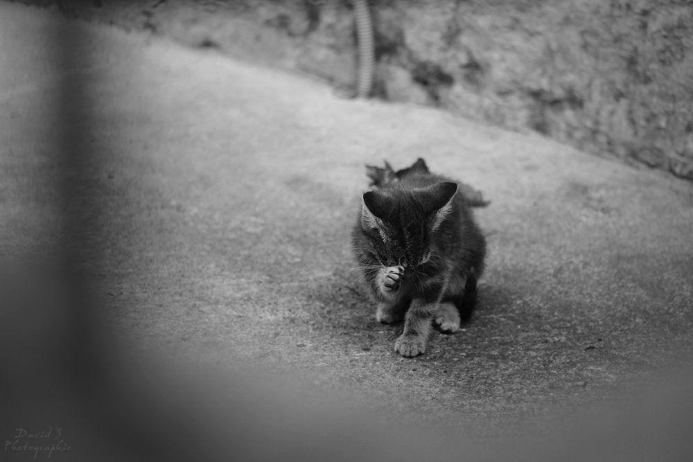 Orphan kitten by David Salobir