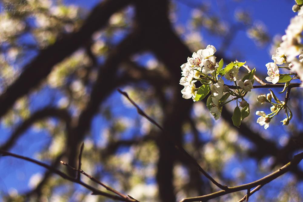 Sunny flower by David Salobir