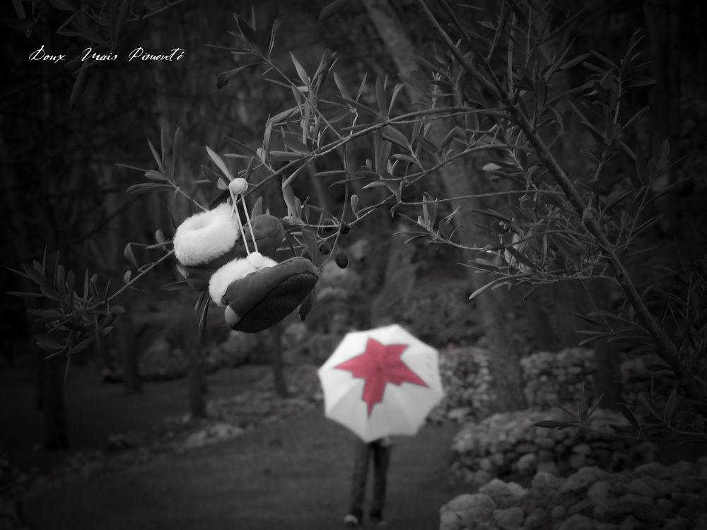 photo de  DMP le chasseur d'images     ( page facebook ) by DMP le chasseur d'images-Photography