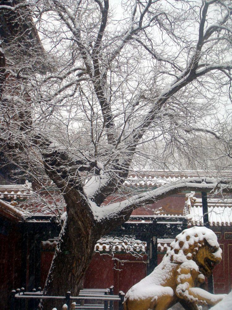 snowing by sunmingwu