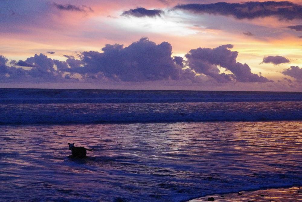 Dog sunset. Dominical Beach, Puntarenas, Costa Rica. by Alfredo Lizano Zumbado