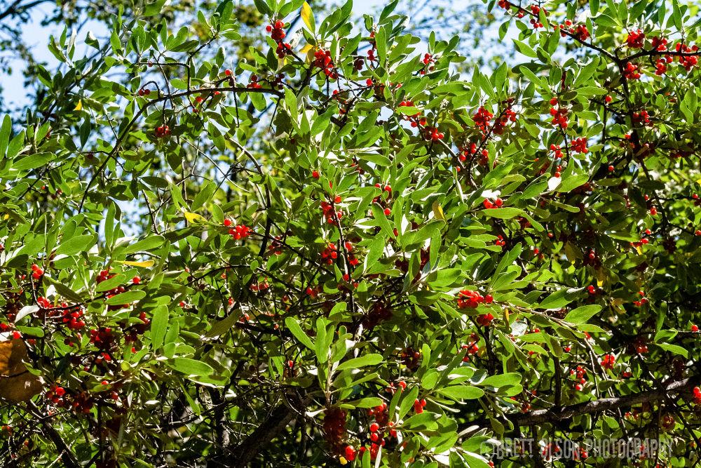 Berries!! by Brett Olson