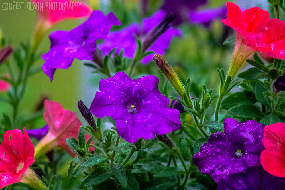 Photo in Nature #flowers #rain