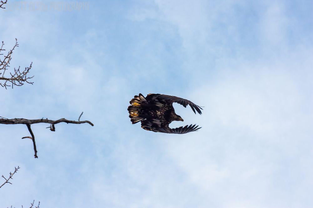 taking flight by Brett Olson