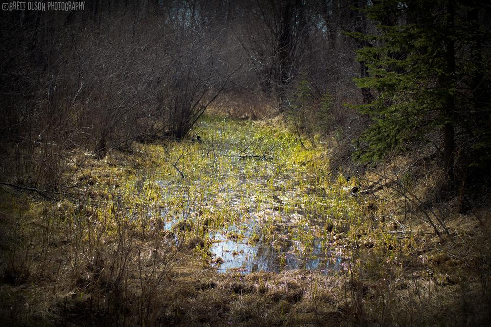 Photo in Landscape #swamp #water #duck