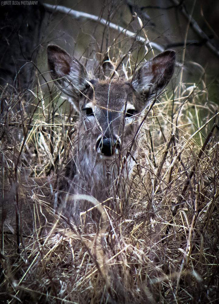 Photo in Animal #deer #doe #peek