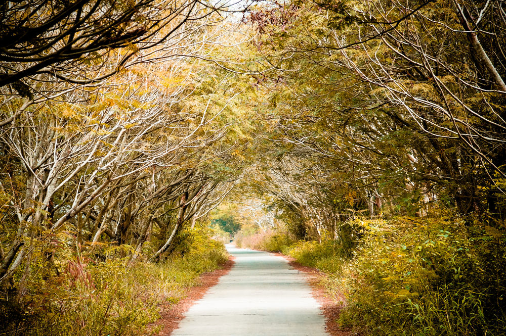 Autumn street by Gió Photography