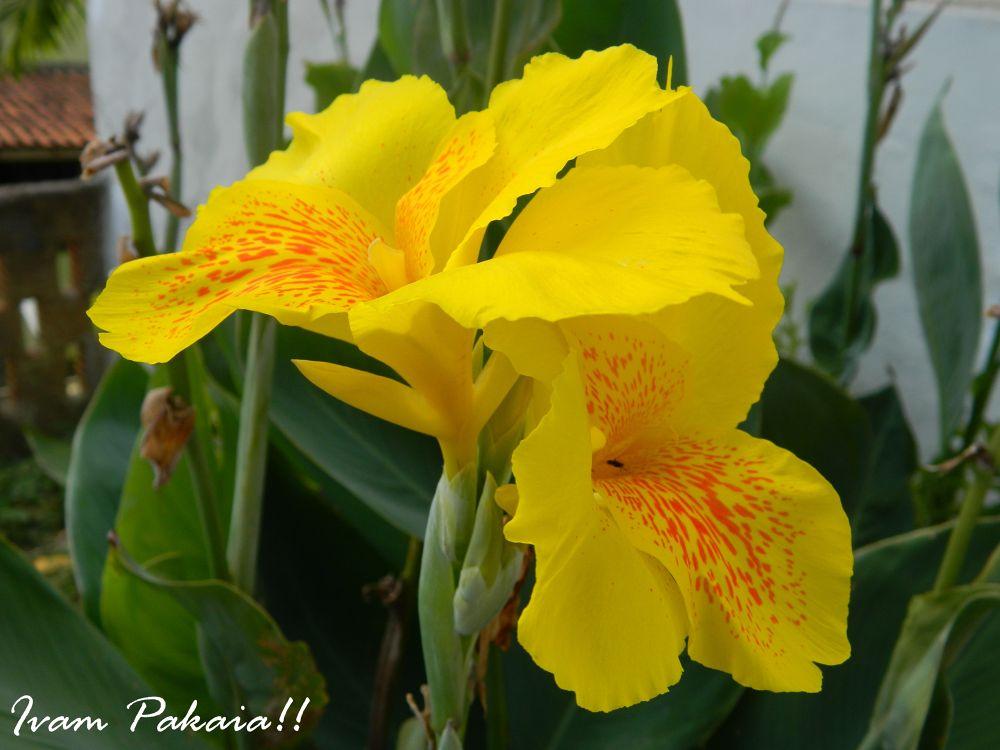 nossa flora by Ivam  Pakaia