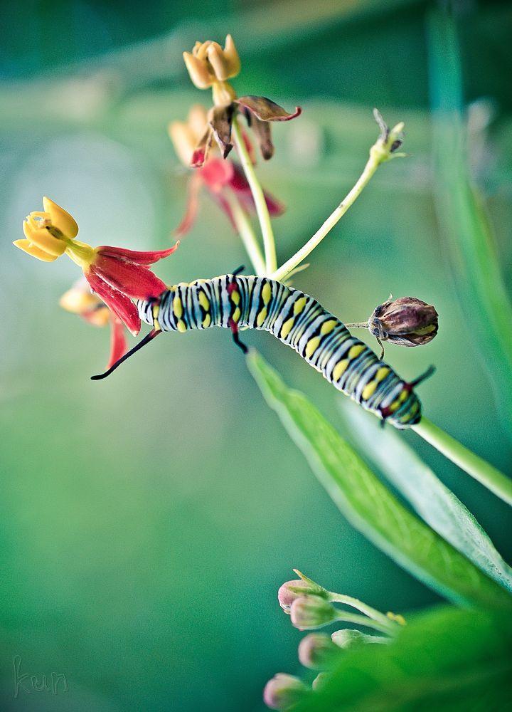 Caterpillar   by Mohd Faridz