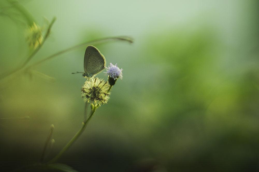 small... by Abd Aziz