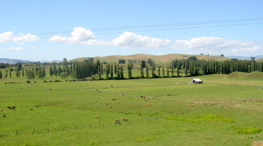 CDocuments and SettingsBossMy DocumentsMy Pictures 513-001.........beauty of new zealand by kcsethi