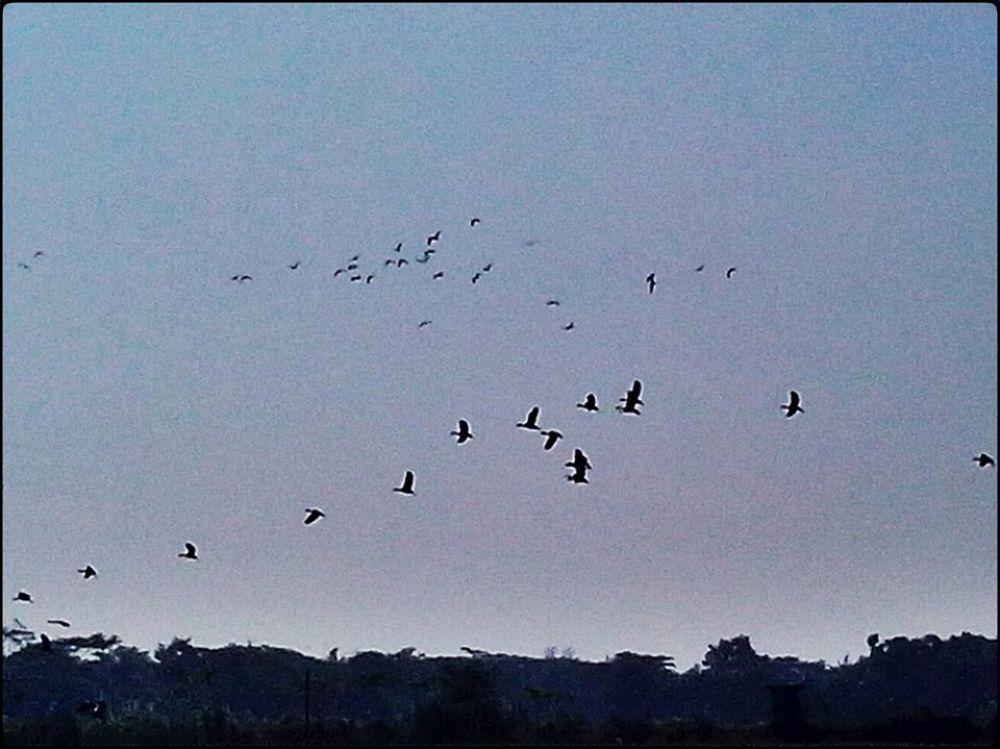 Guest Birds in Bangladesh by Ehsanul Siddiq Aranya