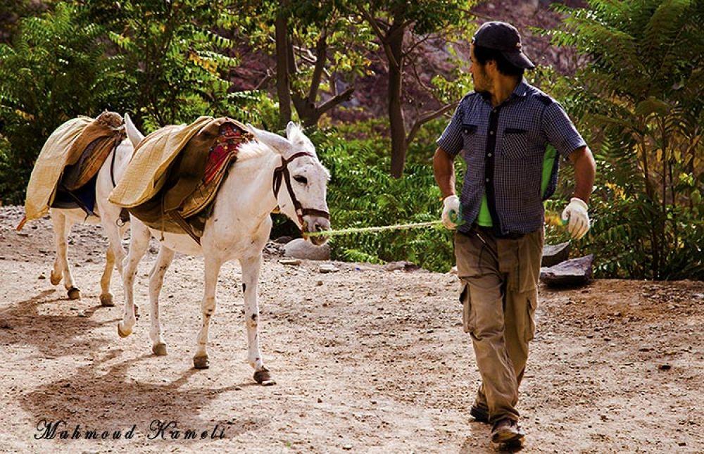 Donkey by MahmoudKameli