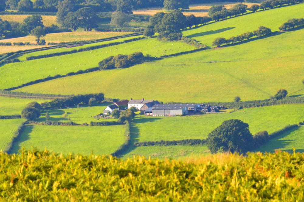 farm in Wales by Delwyn Edwards