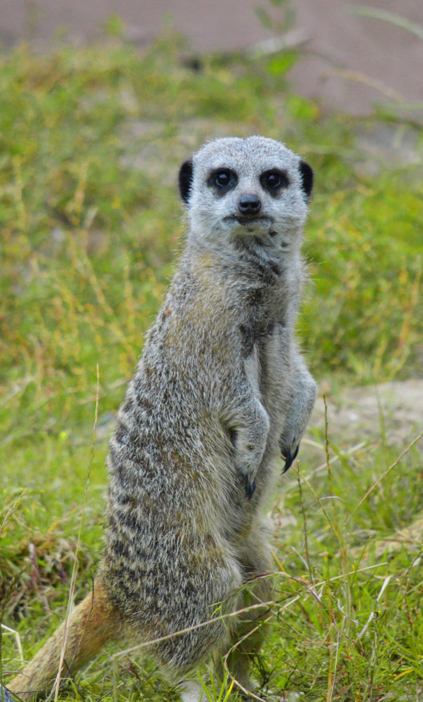 What you looking at? by Delwyn Edwards