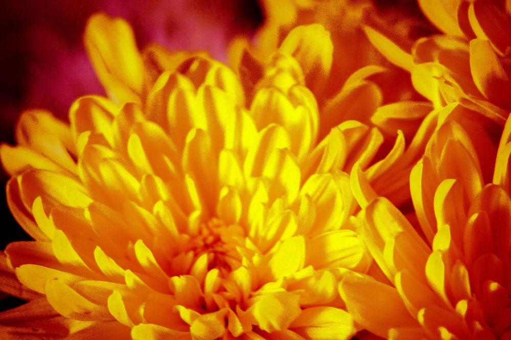 flower by Delwyn Edwards