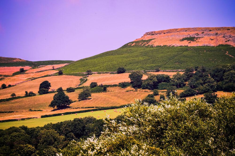 field by Delwyn Edwards