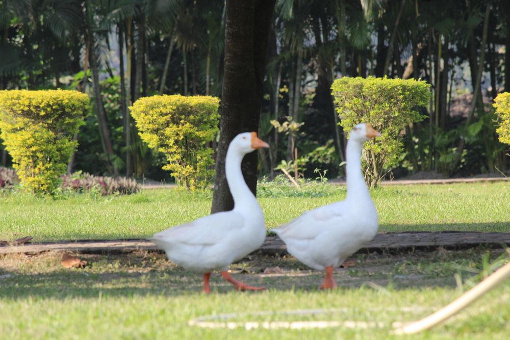 Untitled by Delhi Vigyan Manch