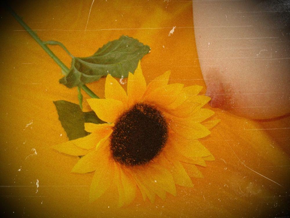 Sunflower by Rico Split