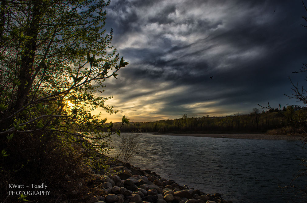 Along The Bow River by Toadie