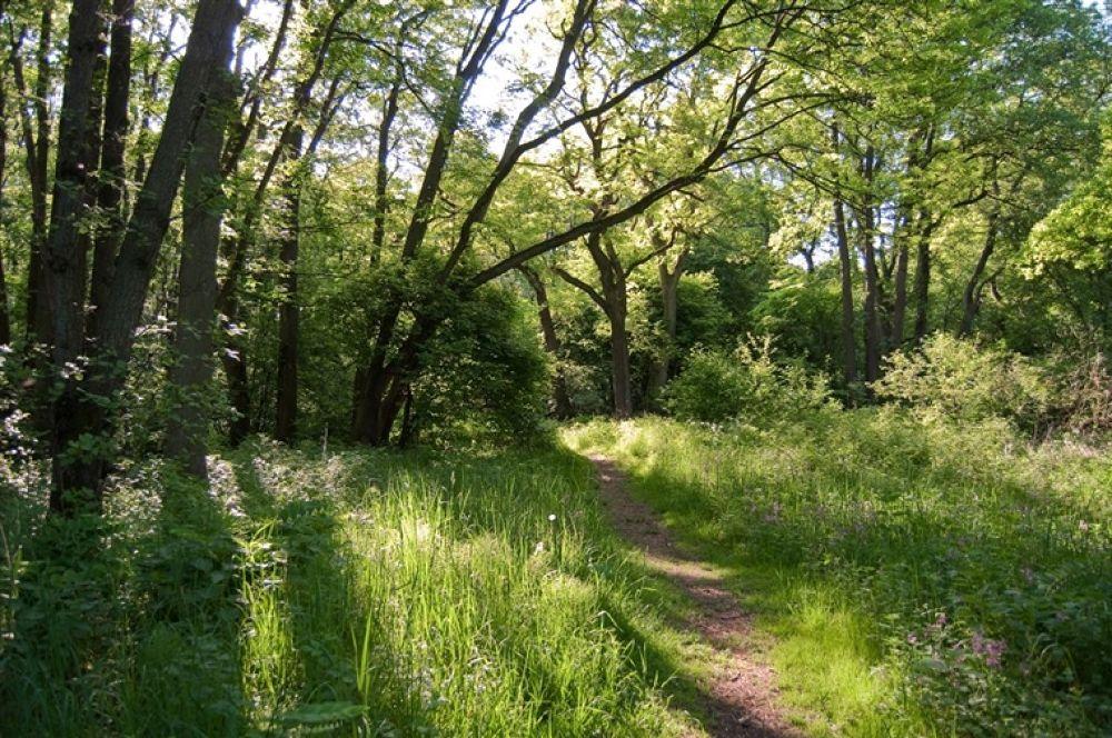 Photo in Random #rya #skogs #naturreservat #(reserve)