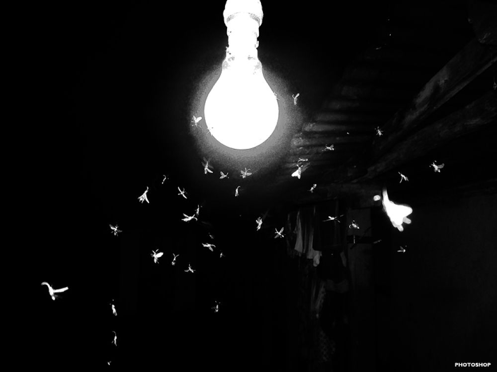 Insects in The Light.  by Santosh Chettri