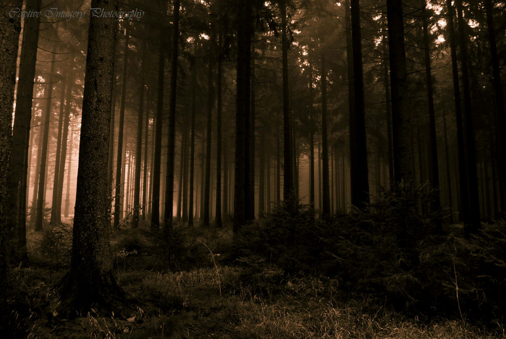 Mystic woods by CaptiveImageryPhotography