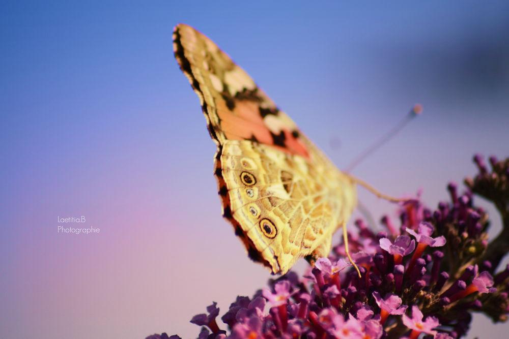 Butterfly by Laetitia Beau