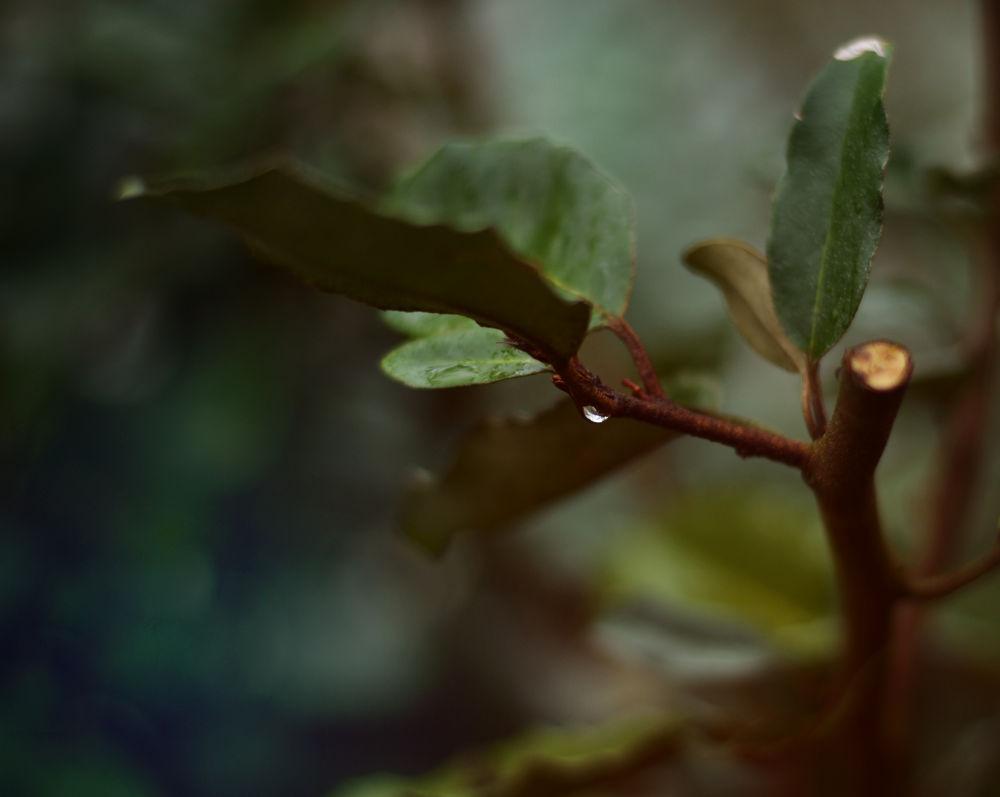 Photo in Nature #leafs #tree #branche #brown #green #water #drop #rain #autumn #dark #blue