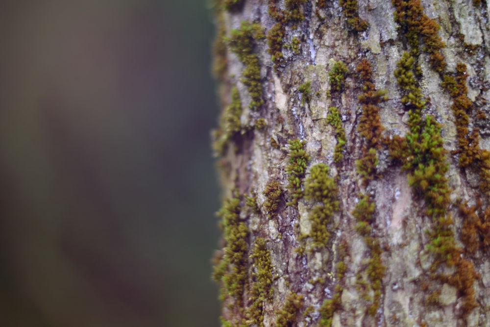 Photo in Nature #tree #trunk #grey #green #purple #autumn #moss #orange #brown
