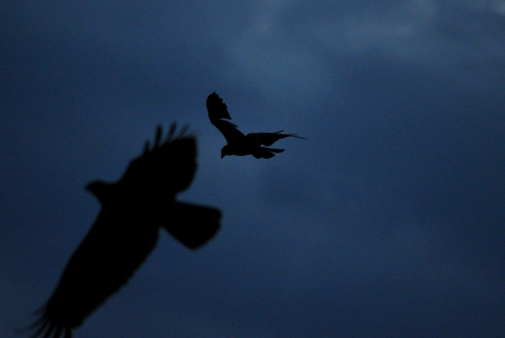Birds in the sky by Tamil Guru