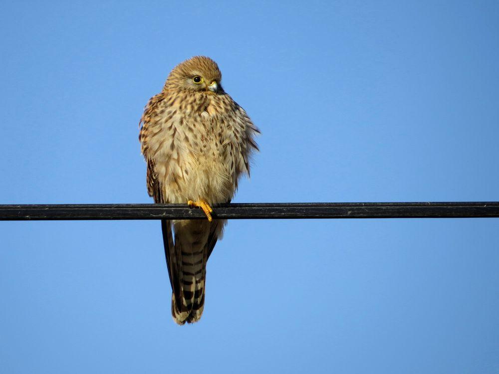 bird by Ha Med
