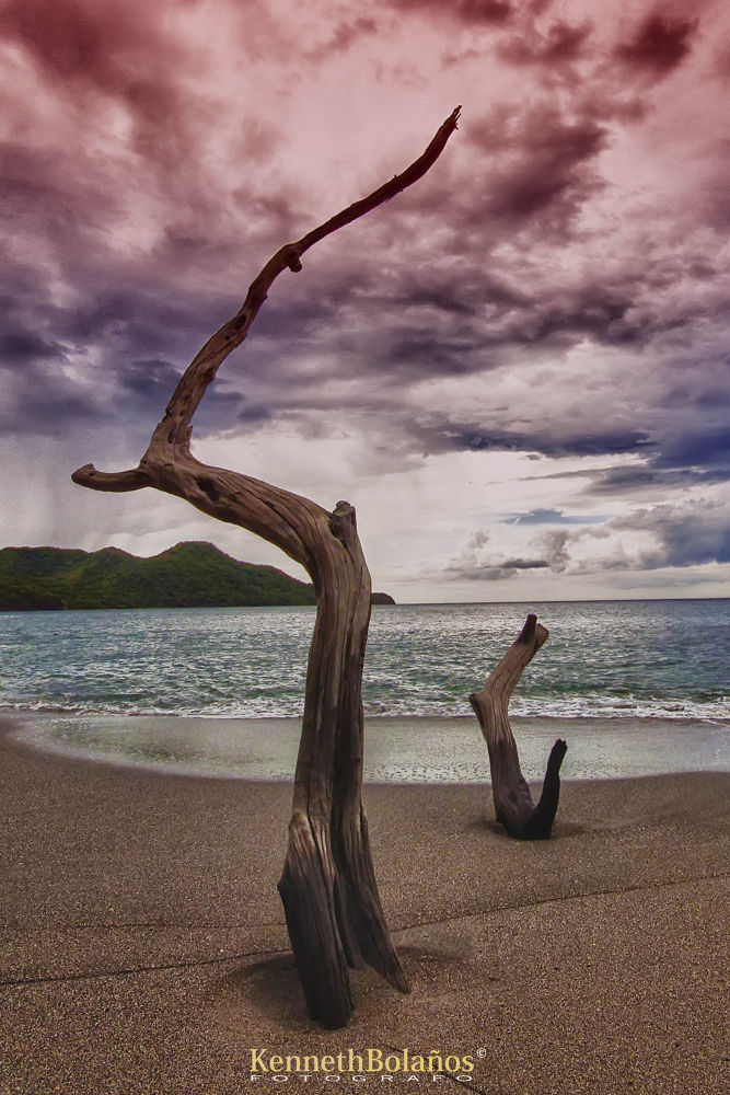 Photo in Landscape #landscape #paisaje #tree #arbol #playa #shore #beach #mar #sea