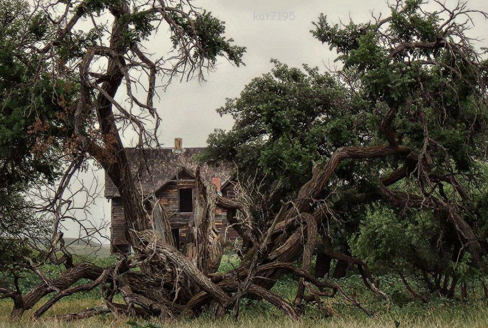 Forgotten in South Dakota by Kim Taylor