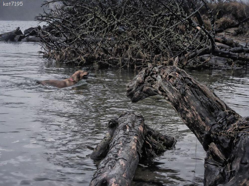 Nehalem Bay state park driftweird beasties by Kim Taylor