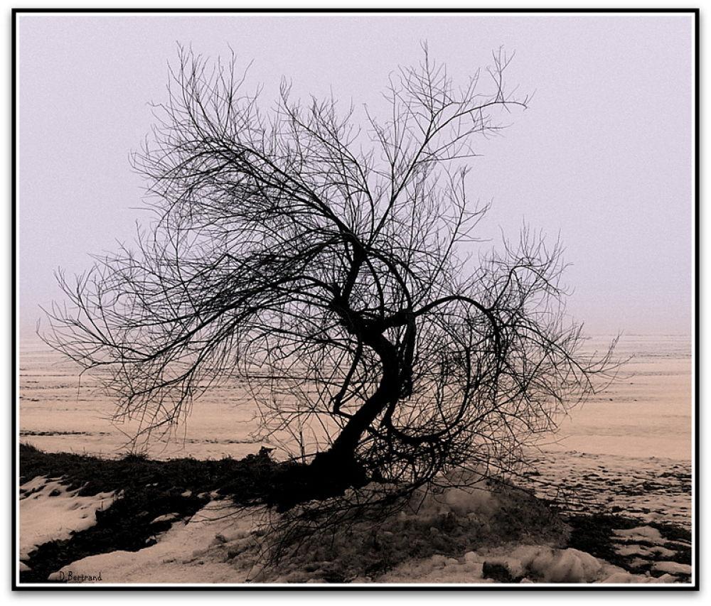 winter by Daniel Bertrand