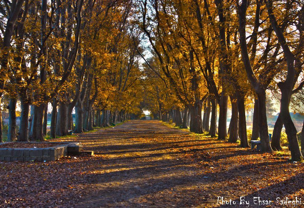 autumn by Ehsan Sadeghi