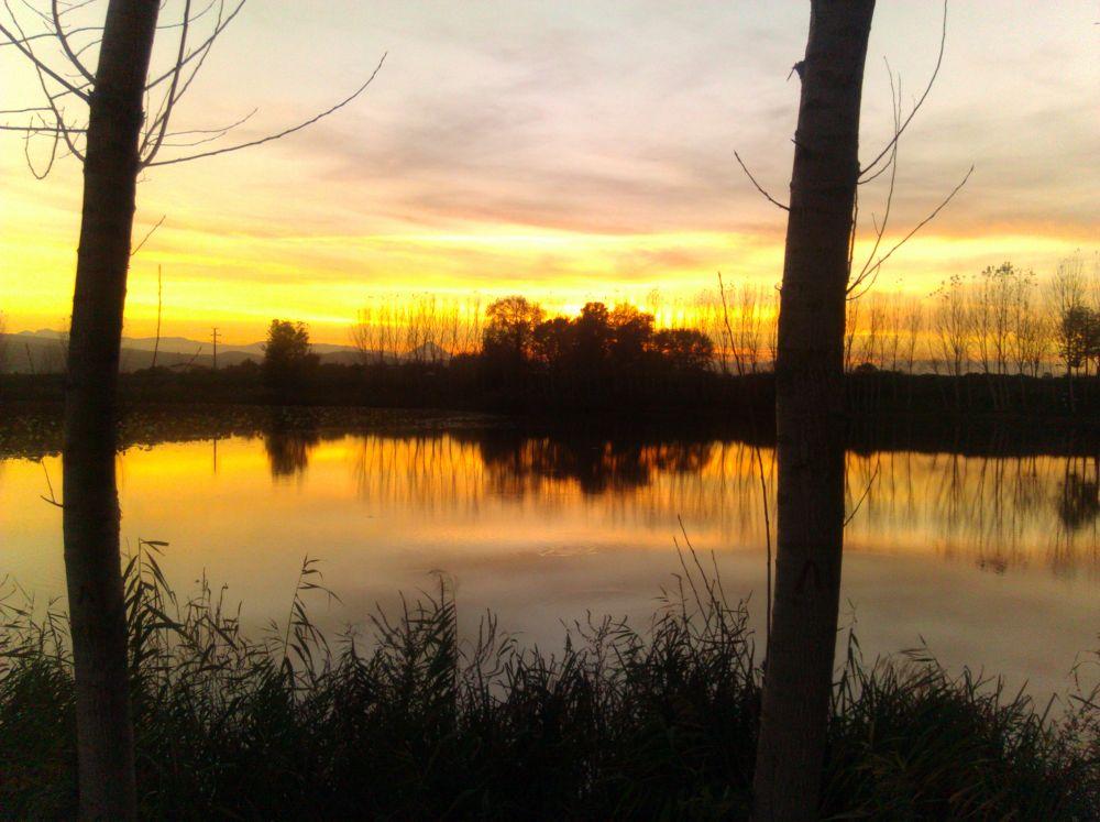 Photo in Nature #marsh #sunset #fen