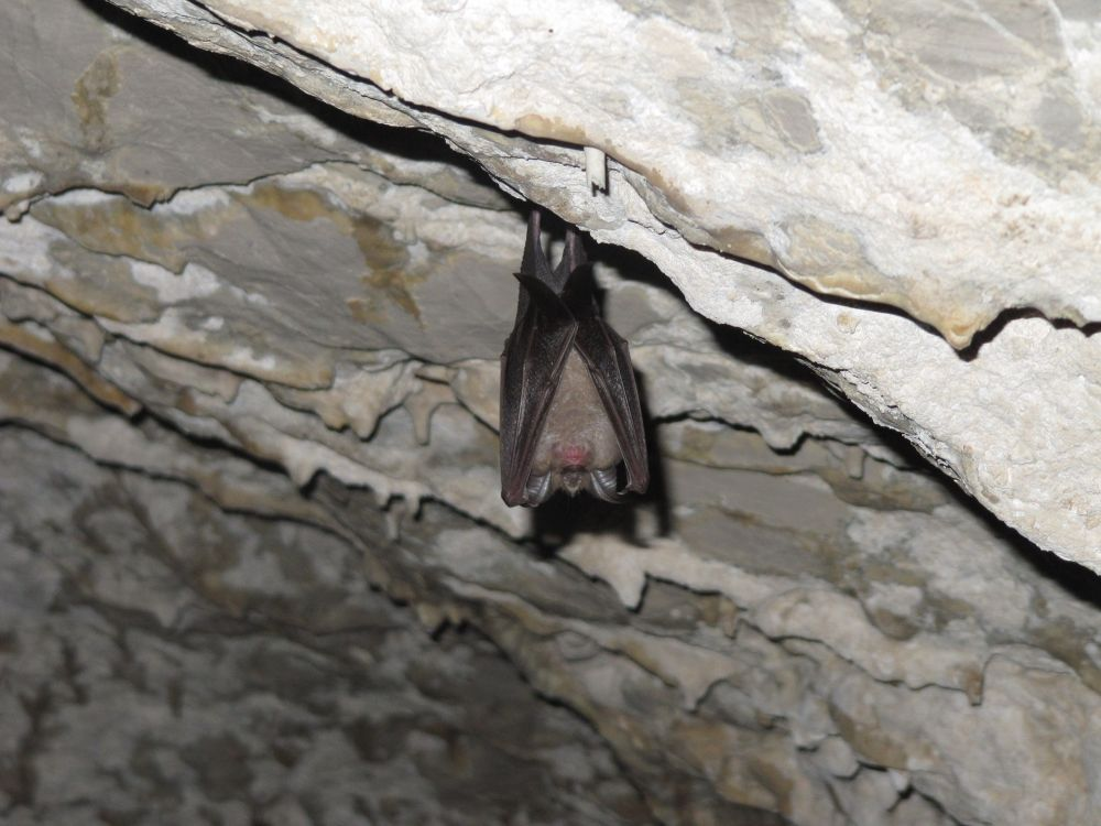 Photo in Animal #bat #cave