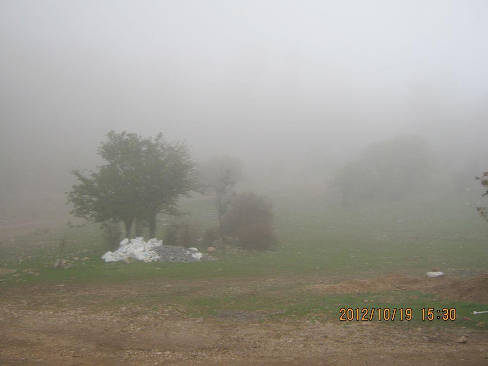 Photo in Landscape #fog #fear #tree