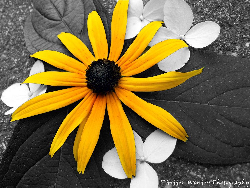 Photo in Nature #flowers #orange #wildlife #nature #splash of color #color #wild #wild flowers #beauty