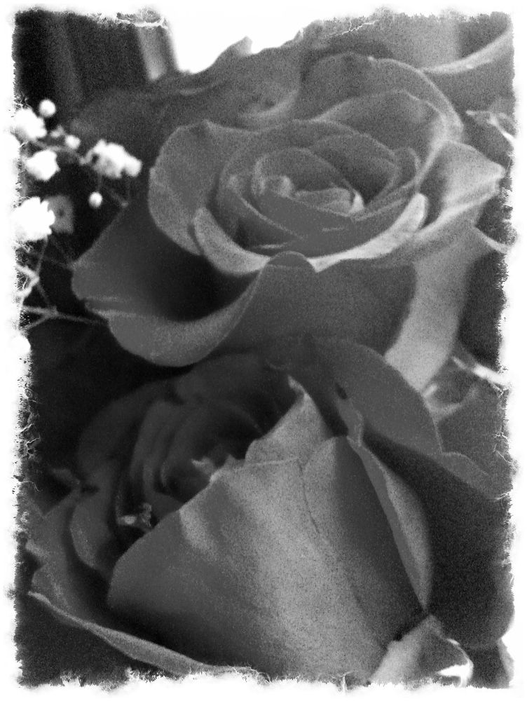 Photo in Black and White #black and white #roses #b & w #rose #flowers #hidden wonder #beauty #love