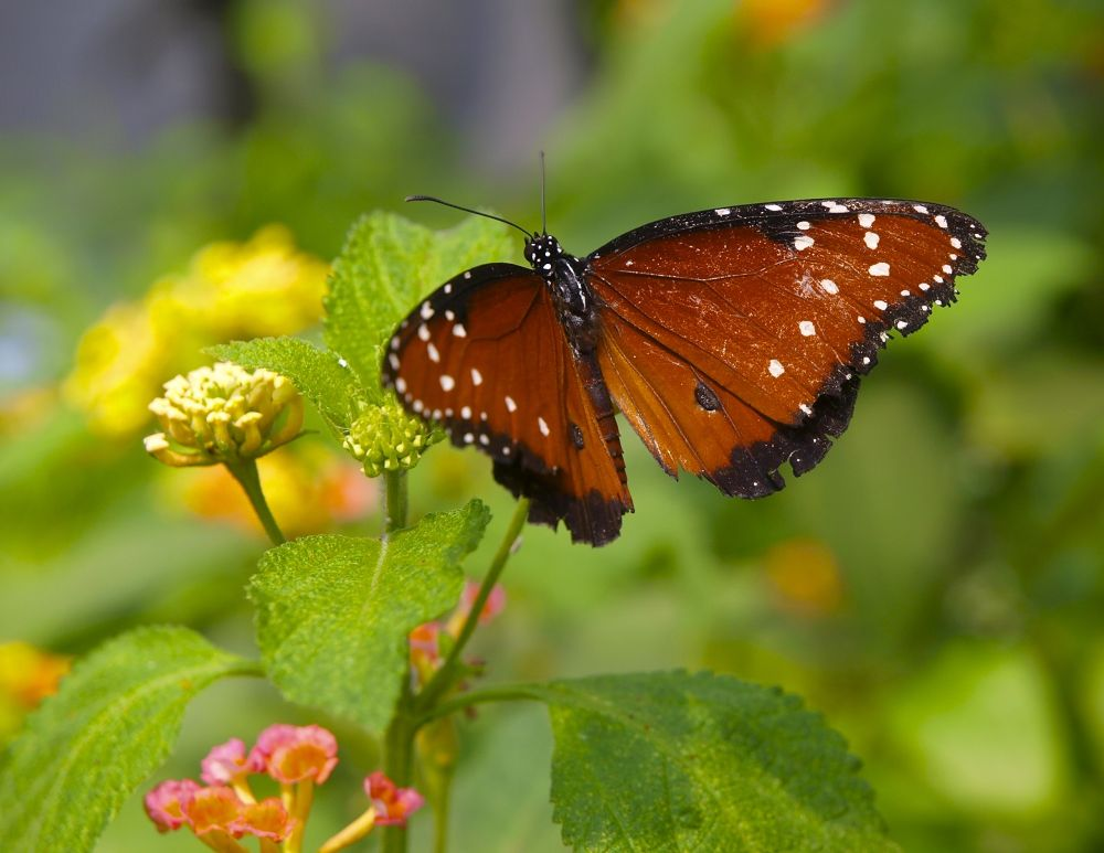 Photo in Animal #butterfly #insect