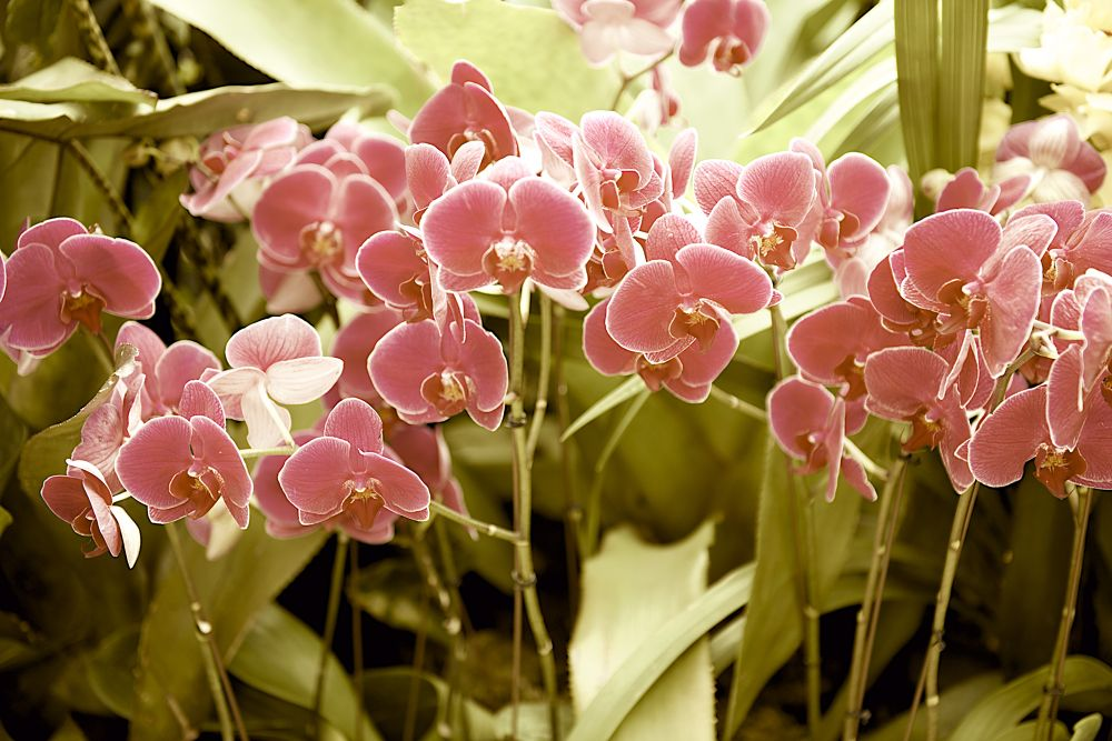 wild orchids by Gary Esoldi