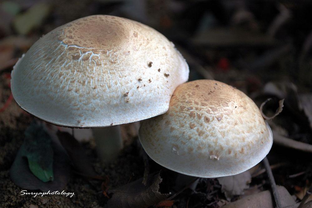 Photo in Nature #mushroom life #suryaprakash