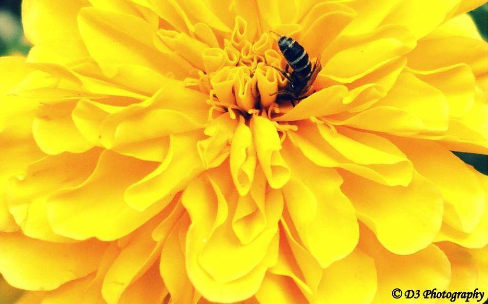 Bee by DevDeep Dey
