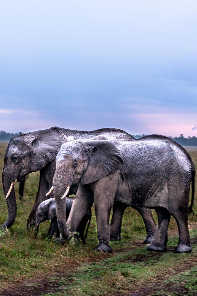 Elephants in the rain by SwissMr